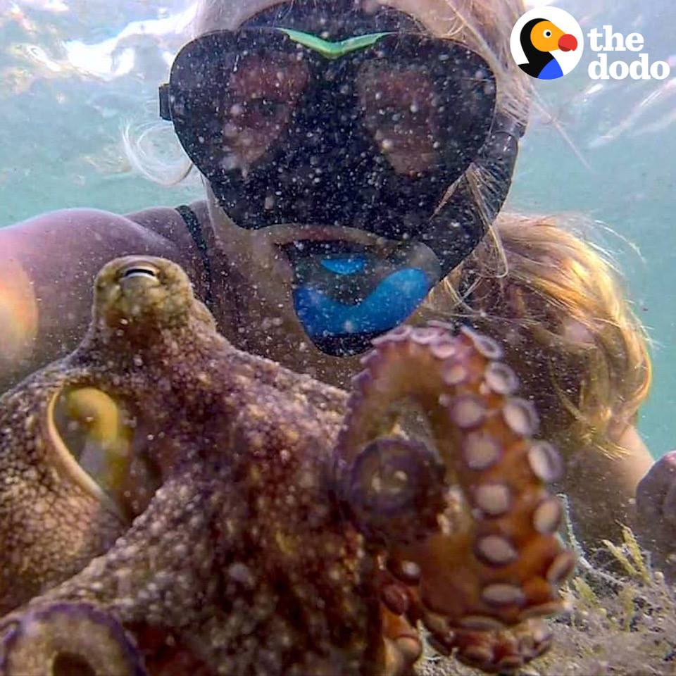 a This Woman And Octopus Are Best Friends 1